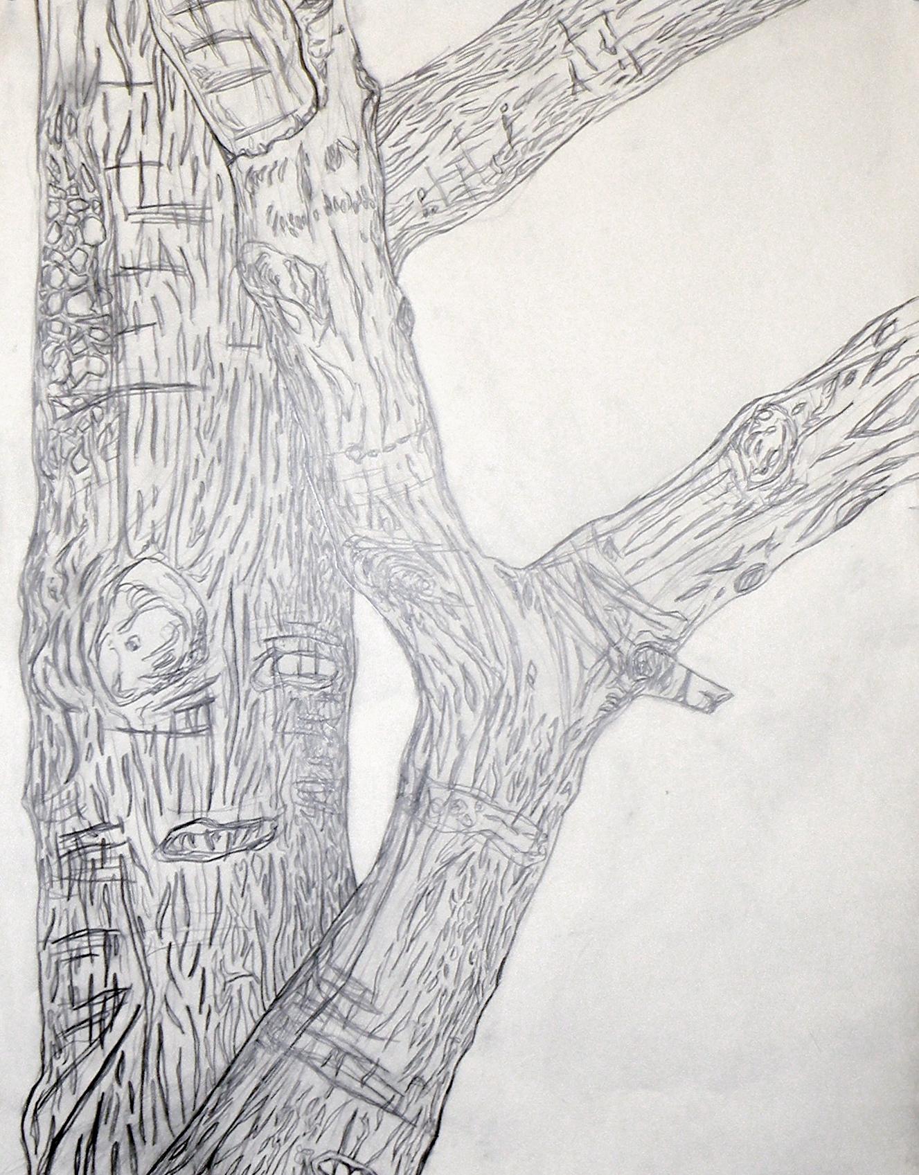 Contour Line Drawing Tree : Contour tree drawing jena seiler