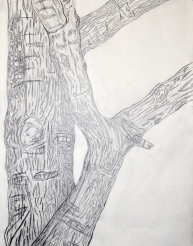 Contour Tree Drawing (Carrie)