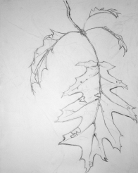 Contour Tree Drawing (Gabrielle)